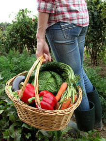 basket full of fresh vegetabls